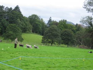 Sheep dog trials in Keswick