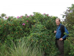 Randy and some beautiful wild rose bushes along the coast