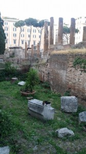 cat on fallen Roman pillar