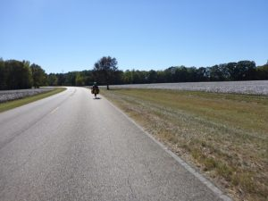 Cycling by cotton field